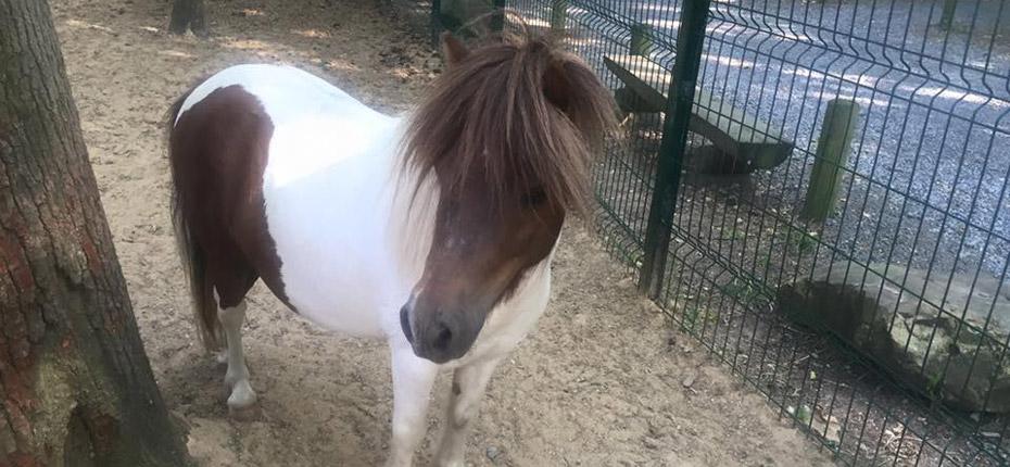 Il est super joli le poney du camping Canada près de Paris