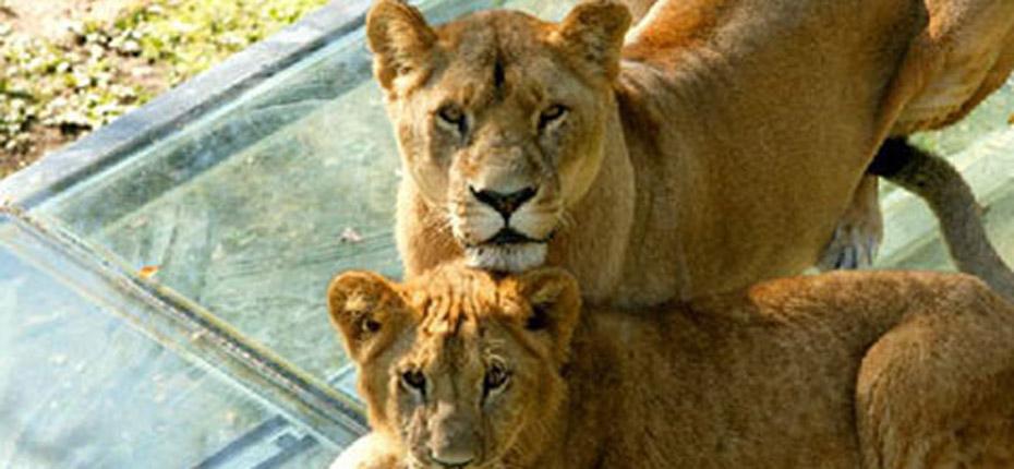 Visitez le zoo de Thoiry à 20 min du camping